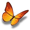 金蝶转转发文章赚钱版v1.0 最新版