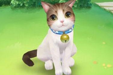喵与筑猫咪朋友们有哪些   喵与筑最萌猫咪全图鉴
