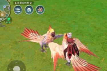 创造与魔法极品鸟怎么抓捕 创造与魔法极品鸟捕捉地点攻略