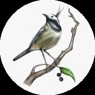 青鸟辅助平台免付费版v1.0 兼职版