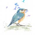 养鸟岛兴趣社区版v98784512.7 最新版