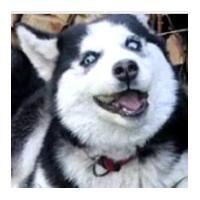 舔狗日记生成软件桌面版v1.0 电脑版