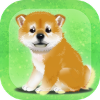 养育柴犬的治愈汉化单机版v1.0 无广v1.0 无广告版
